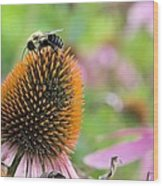 Purple Coneflower And Guest Wood Print