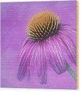 Purple Coneflower - Echinacea Purpura Wood Print