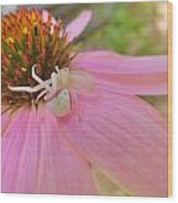 Purple Coneflower With Crab Spider Wood Print
