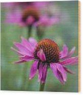 Purple Coneflowers In A Row Wood Print