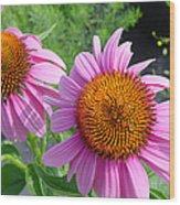 Purple Coneflowers Wood Print