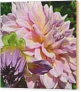 Purple Dahlia With Bud Wood Print