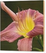 Purple Daylily Wood Print