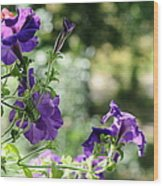 Purple Delight. Petunia Bloom Wood Print