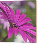 Purple Delight Wood Print