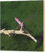 Purple Dragonfly Wood Print by Ella Char