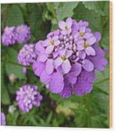 Purple Eye Candy That Pops Wood Print