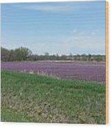 Purple Field Wood Print