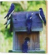Purple Finch 2 Wood Print