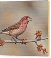 Purple Finch Wood Print