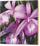 Purple Flock Of Cattleya Orchids Wood Print