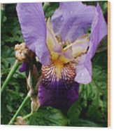 Purple Flower After Rainfall Wood Print by Doc Braham