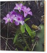 Purple Flower At Enchanted Rock Wood Print