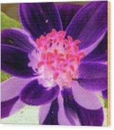 Purple Flower - Photopower 257 Wood Print