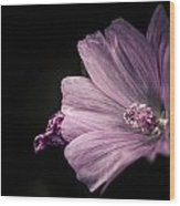 Purple Flower Surrounded With Black Wood Print