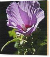 Purple Flower With Dark Background Wood Print