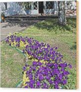 Purple Flowerbed Wood Print