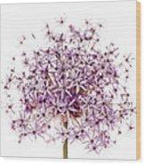 Purple Flowering Onion Wood Print