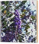 Purple Flowering Tree Wood Print