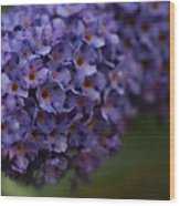 Purple Flowers 1 Wood Print