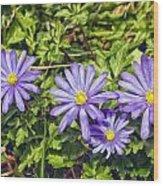 Purple Flowers Lookiing Like Daisies Wood Print