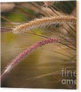 Purple Fountain Grass Ornamental Decorative Foxtail Home Decor Print Wood Print