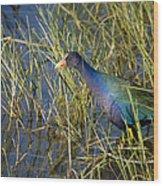 Purple Gallinule 2 Wood Print