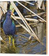 Purple Gallinule 4 Wood Print