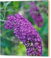 Butterfly Bush Garden Flower Wood Print