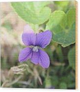 Purple Garden Flower Wood Print