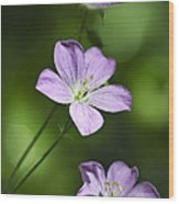 Purple Geranium Flowers Wood Print