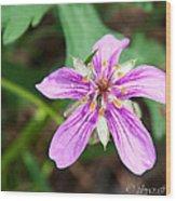 Purple Geranium Wood Print