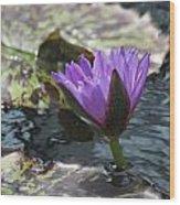 Purple Glory Wood Print
