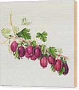 Purple Gooseberry Wood Print