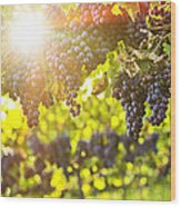 Purple Grapes In Sunshine Wood Print