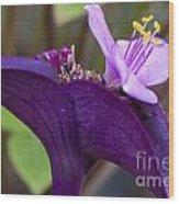 Purple Heart Flower Wood Print