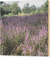 Purple Heather Wood Print