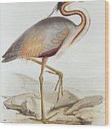 Purple Heron Wood Print