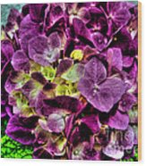 Purple Hortensia After Summer Rain Wood Print