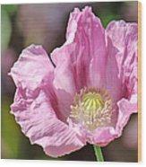 Purple Iceland Poppy Wood Print