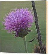 Purple In Nature Wood Print