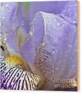 Purple Iris - 3 Wood Print