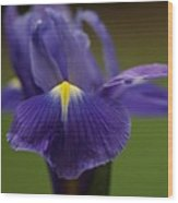 Purple Iris 6 Wood Print