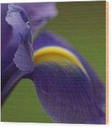 Purple Iris 9 Wood Print