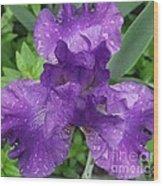 Purple Iris After The Rain Wood Print