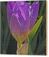 Purple Iris' Birth Wood Print