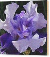 Purple Iris Bloom Wood Print