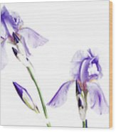 Purple Iris Glow Wood Print
