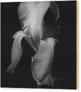 Purple Iris In Black And White Wood Print
