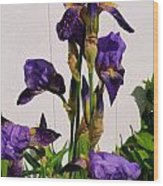 Purple Iris Stalk Wood Print